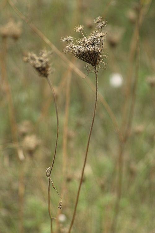 nature flower dry