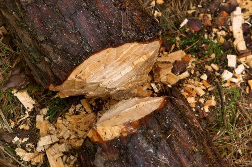 nature wood tree
