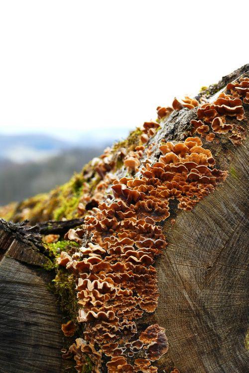 nature tree wood