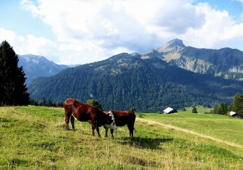 nature france alps