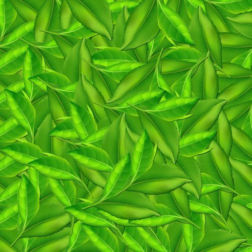 nature leaf background