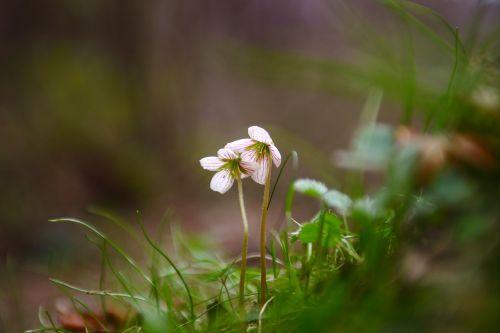 nature flowers grass