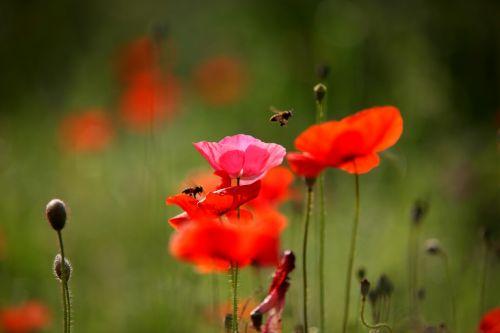 nature flowers plants