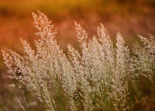nature growth season