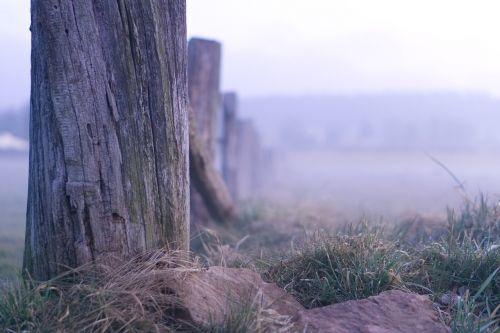 nature landscape wood