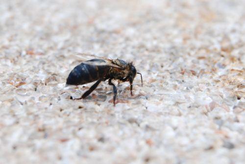 nature insect animalia