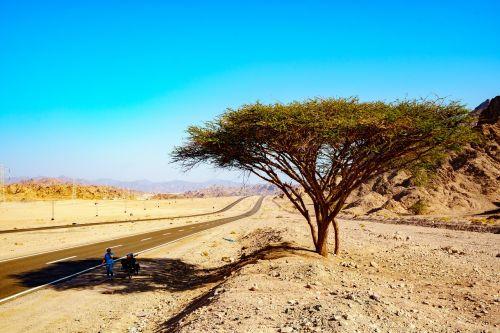 nature,sand,travel,landscape,sky,wheel travel,egypt