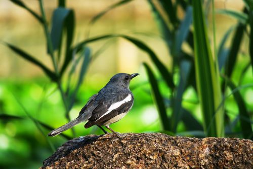 nature bird wildlife
