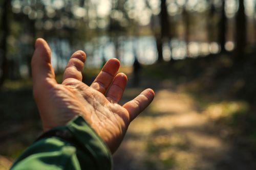 gamta, saulė, žmogus, suaugęs, ranka, pirštas, Uždaryti, laikyti, tapetai, turintis, sustabdyti, apsauga, laikyti rankas, pateikti, miškas, Sveiki, kraštovaizdis, pristatymas, Bokeh, Rodyti, pasiūlymas, vyras, fotografija, be honoraro mokesčio