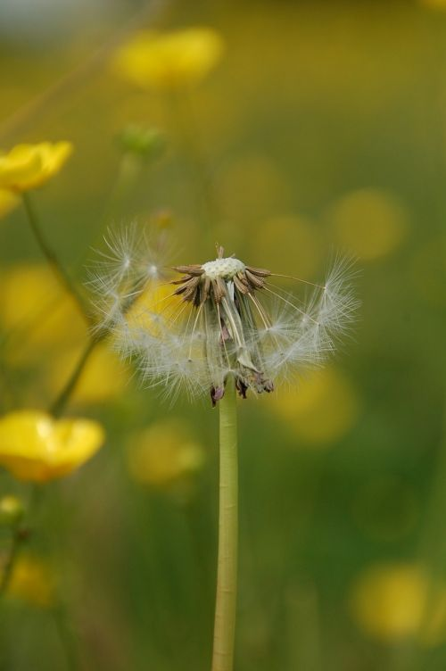 nature summer weeds