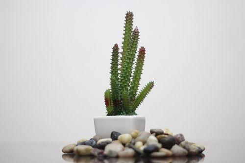 nature desktop flora