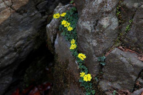 nature rock outdoors