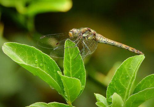nature bug sheet