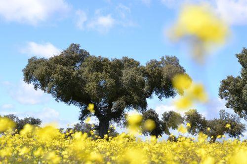 nature field tree