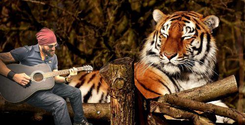 gamta, laukinė gamta, animalia, portretas, gitaristas, tigras, be honoraro mokesčio