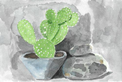 gamta, kaktusas, kaktusai, bebrio uodegos kaktusas, akmenys, akmuo, cementas, pilka, žalias, be honoraro mokesčio