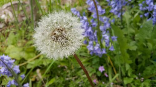 gamta, augalas, gėlė, vasara, žolė, Uždaryti, žalia žolė, saulėtas, pieva, žalias, žolės, žydėti, kiaulpienė, žole pieva, aukšta žolė, be honoraro mokesčio