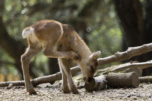 nature mammalia animalia