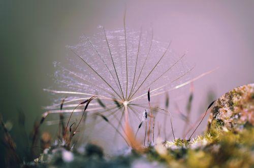 nature plant moss