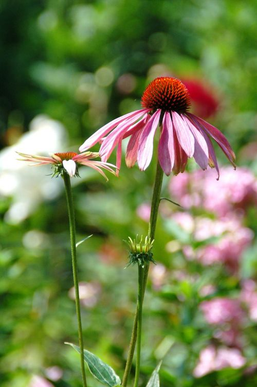 nature plant sheet