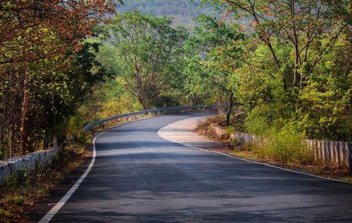 nature tree road