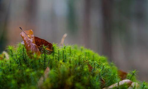 nature leaf plant