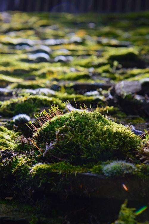 nature plant color moss