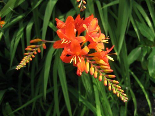 nature flora flower