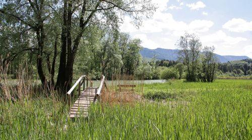 nature tree grass