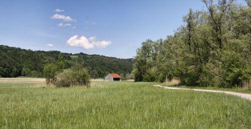 nature grass landscape