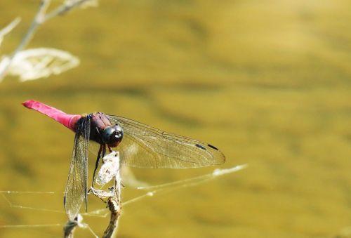 nature animal waters