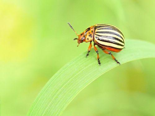 gamta, vabzdys, mažas, gyvūnų pasaulis, vabalas, be honoraro mokesčio