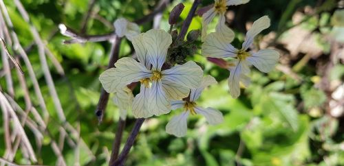 nature plant botany