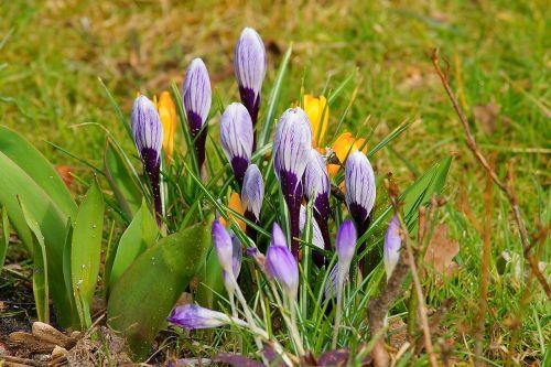 nature flowers plant