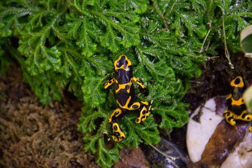nature invertebrate insect