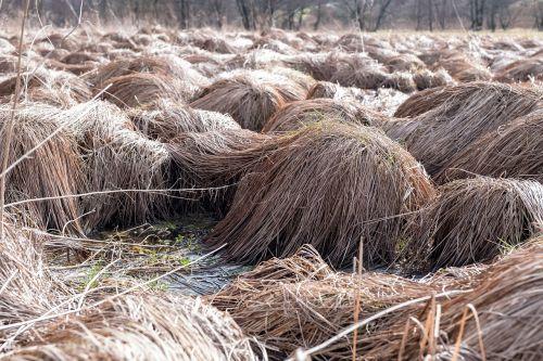 nature straw hay