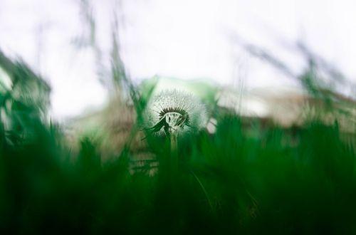 nature grass plant