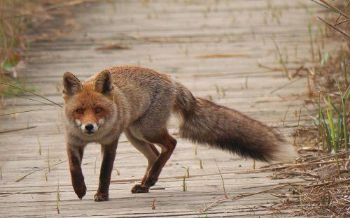 nature fauna predator