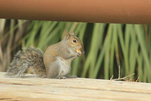 nature animalia small