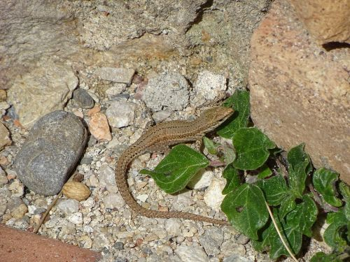 nature animalia reptilia