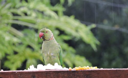 nature bird birdwatching