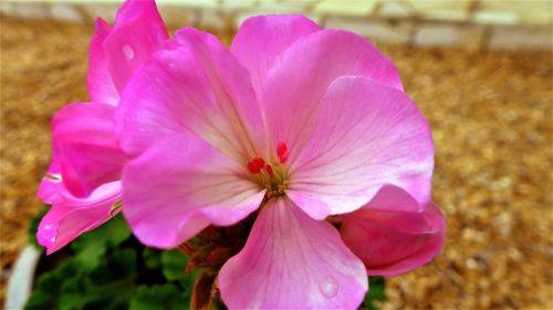 nature flower plant