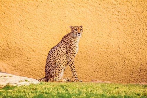 nature  cat  animal