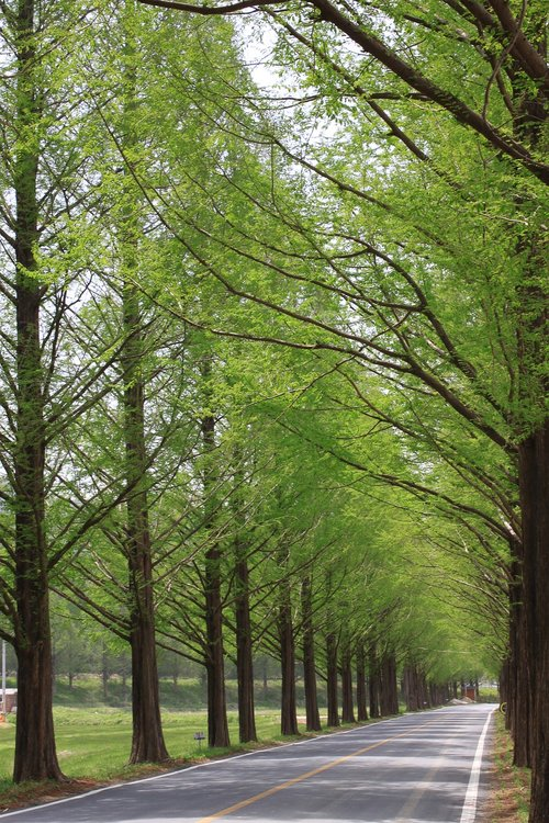 nature  wood  leaf