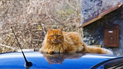 nature  animalia  cat