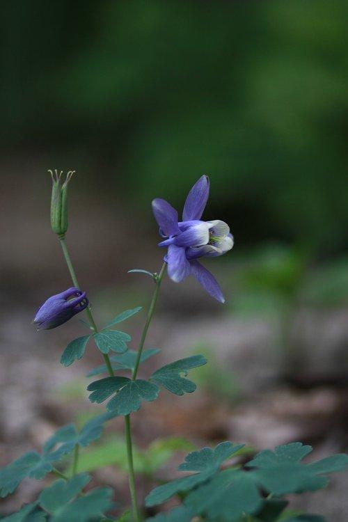 nature  plants  flowers