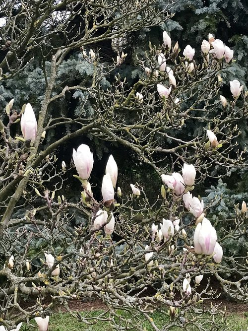 nature  spring  buds