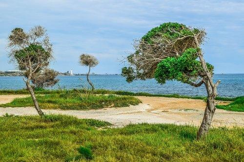 nature  landscape  trees