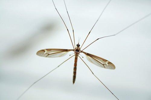 nature  mosquito  jesus creation