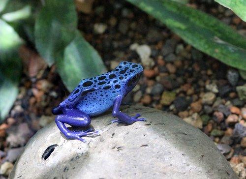 nature  animal world  amphibian